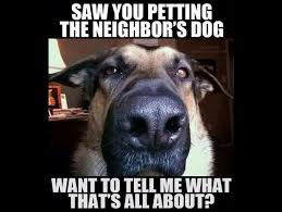 Funny Dogs Memes - these seriously funny dog memes are barking up the right tree