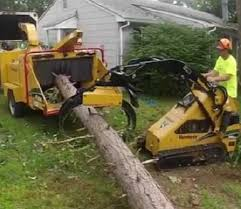 tree service in danbury ct danbury tree pros