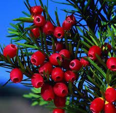 Tropische Pflanzen Im Garten Gift Im Garten Diese Pflanzen Sind Für Kinder Gefährlich Welt