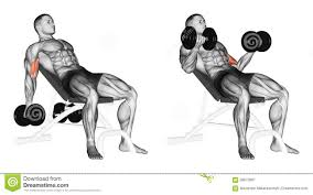 exercising lifting dumbbells for biceps muscles on an incline