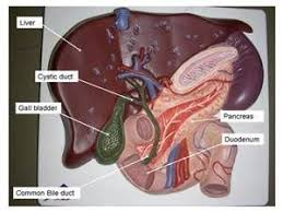 Anatomy And Physiology Lab Practical 2 64 Best Lab Practical Images On Pinterest Labs Human Anatomy