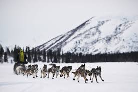 2016 iditarod trail sled dog race see the best photos time com
