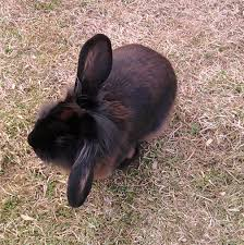 Happy Hutch Company Is My Rabbit Happy The Tell Tale Signs Pethelpful