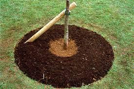 tree stakes trees staking rhs gardening