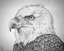 how to draw a eagle bald eagle portrait by techdrakonic on