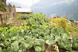 Backyard Farms On Nepal And Dream To Live U2014 Woop Zine