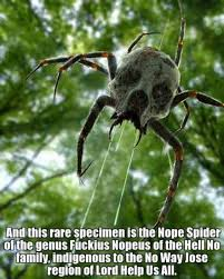 Funny Spider Meme - new species of spider found in the australian outback funny
