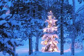 winter glow xmas tree blue colorful christmas winter time frosty
