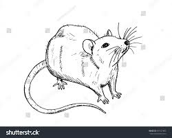 rat sketch drawn by hand black stock vector 657527683 shutterstock