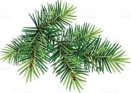 green christmas pine tree branch stock vector art 615090746 istock