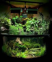 Planted Aquarium Aquascaping 169 Best Aquarium U0026 Terrarium Images On Pinterest Terrarium