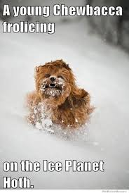 Chewbacca Memes - young chewbacca weknowmemes