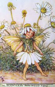 cicely barker flower fairies figurines search