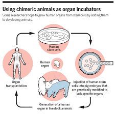 Human Organs Images Major Grant In Limbo Nih Revisits Ethics Of Animal Human Chimeras