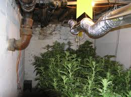 basement grow room basements ideas