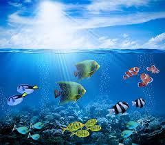 rays of light fish underwater world sea sky animals