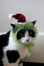 grinch halloween costumes the grinch cat costume haha my cat would claw my eyes out if i