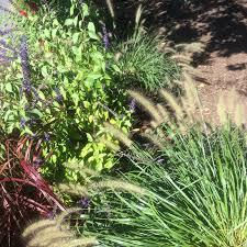 garden by duchess designs tips for ornamental grass