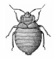 costs of pest for bedbugs in pune and other cities