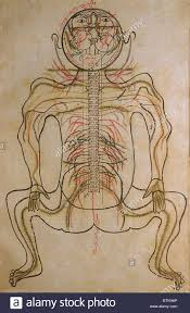 Nervous System Human Anatomy The Nervous System From Mansur U0027s Anatomy Authored By The Persian