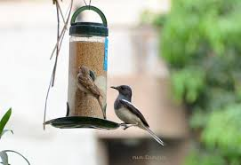 buy nature forever bird feeder transparent 2 pieces online at