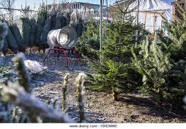 christmas tree netting machine stock photos u0026 christmas tree