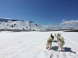 iceland with kids family vacation iceland best kid friendly