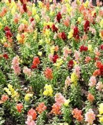 Flower Seeds Online - 130 best online gardening store india images on pinterest india