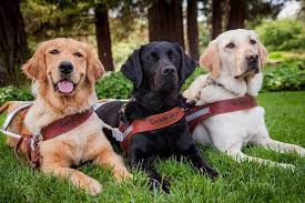 Dog Blinds Guide Dogs For The Blind Home Facebook
