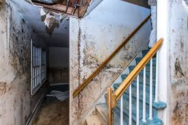 Handrail Synonym Three Common Causes Of Toxic Building Mold Ced Technologies Inc