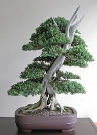 pot bonsai design the art of bonsai project feature gallery juniper bonsai