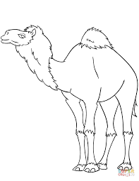 cartoon dromedary camel coloring page free printable coloring pages
