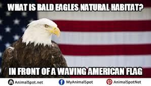 America Eagle Meme - bald eagle memes