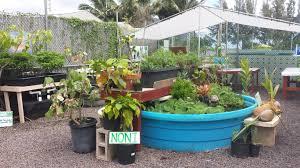 native hawaiian plant nursery field trip hawaiian canoe plants waiahole nursery u0026 garden center