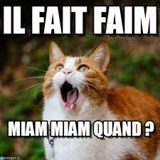 Chat Meme - il fait faim chat meme on memegen