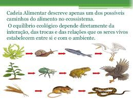 si e habitat habitat nicho ecológico componentes do ecossistema cadeia e teia a