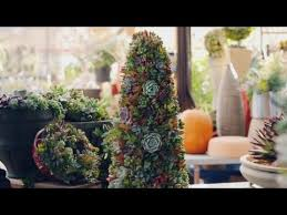 how to create succulent objects and christmas trees youtube