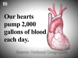 Anatomy Of Human Heart Pdf Human Body Facts Things We Should Know My Lights