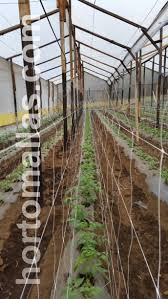 trellis net for vegetables on greenhouses and open field