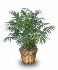 exotic house plants exotic house plants how to take care of