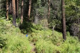 mt lemmon hiking trails map butterfly trail hike lemmon