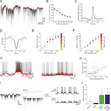 synaptic representation of locomotion in single cerebellar granule