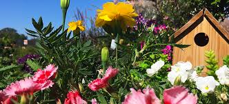9 perfectly petite fairy garden plants flower power
