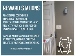 Good Door Setting Reward Stations For Better Training Growl Snarl Snap Dog Behavior