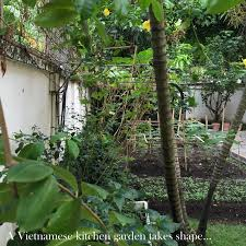 a tale of one house collage of life a tale of a humble vietnamese kitchen garden