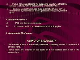 Which Cell Helps In Movement Of Bones Periodantal Ligament