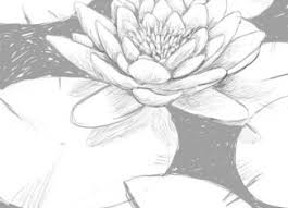 lily pads drawings google search print making inspirations