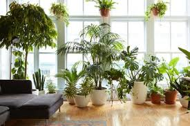 low light house plants 8 houseplants that can survive urban apartments low light and