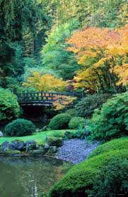 best 20 japanese garden plants ideas on pinterest shade plants