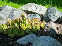Creating A Rock Garden 4 Things To Before Creating A Rock Garden